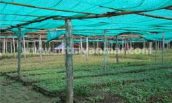 plantation-1
