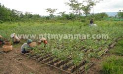 plantation-2